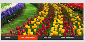 jQuery Slideshow with Text Navigation